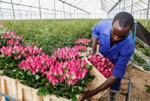 Kenia_Flowers